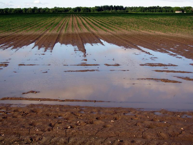 Nachhaltige Landwirtschaft und Klimawandel