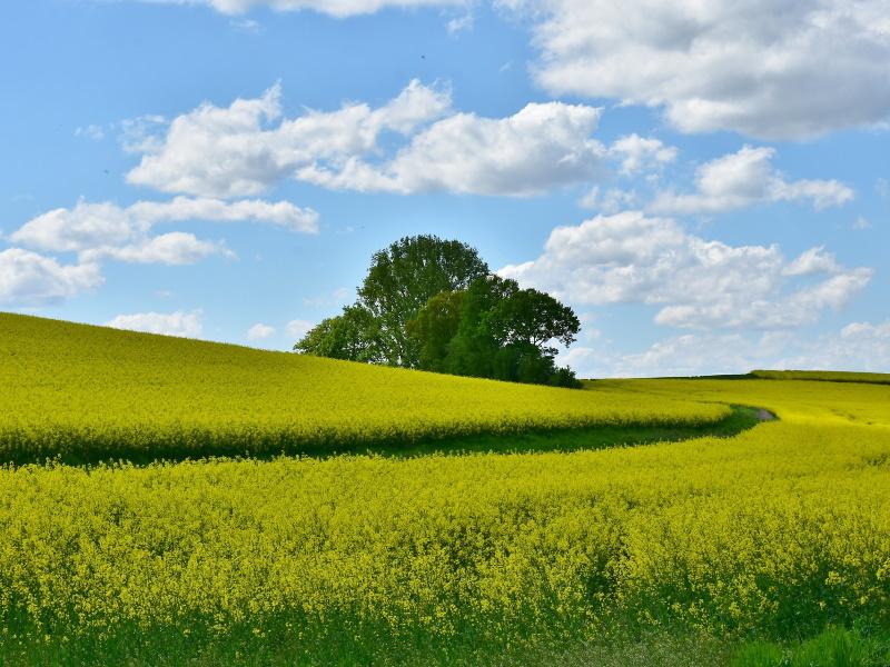 Bodenhilfsstoffe Großkulturen