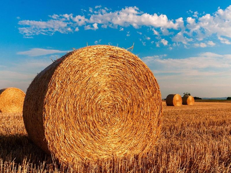 Nachhaltige Landwirtschaft bei HanseGrand