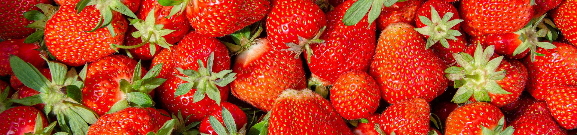 Nachhaltige Landwirtschaft im Bereich Erdbeeren
