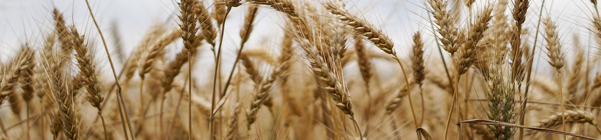 Nachhaltige Landwirtschaft im Bereich Großkulturen