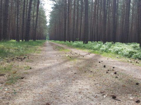 Forstweg sanieren
